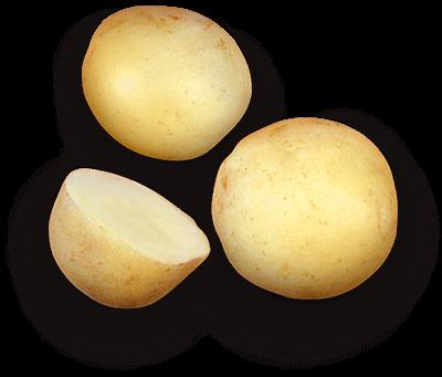 Gemson potato
