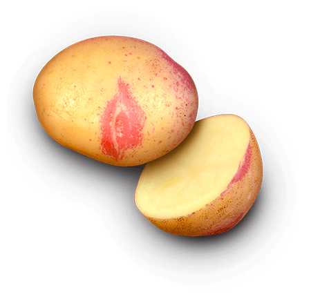 Rande's Golden Gem potato