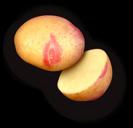 Rande's Golden Gem potato