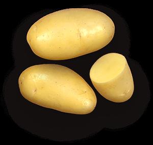 Jazzy potato