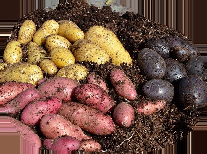growing-organic